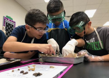 7th Grade Science Dissections